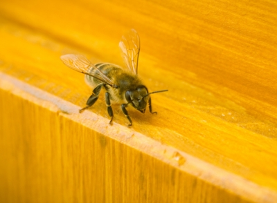 Human Beeing